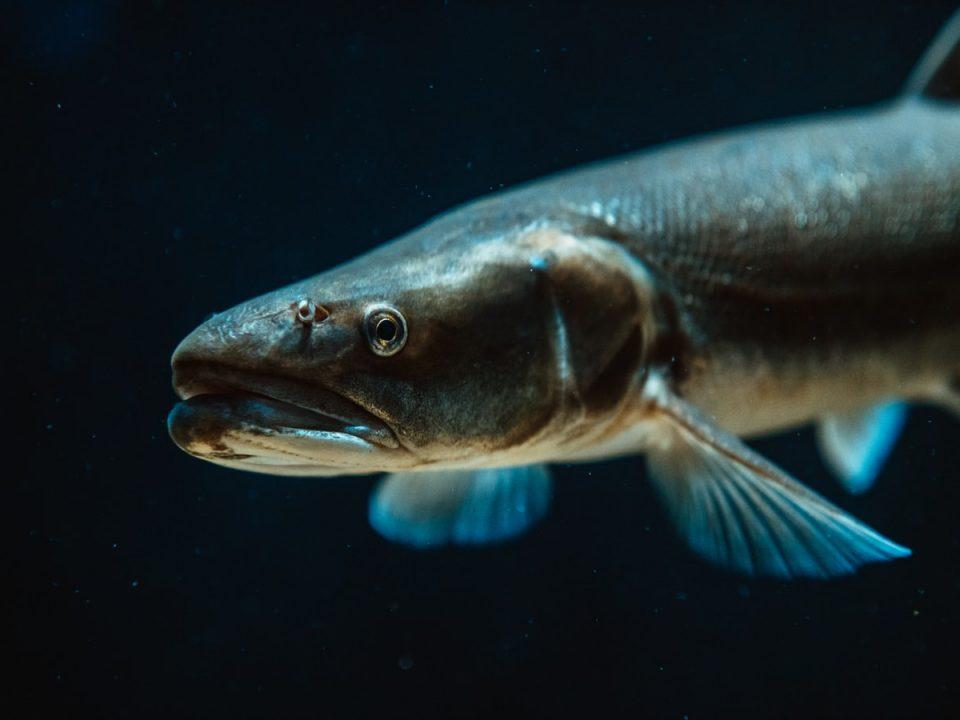 Из чего, как и где делают рыбий жир