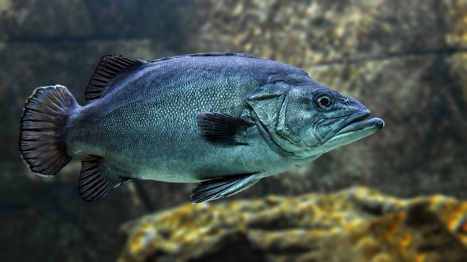 Витамины в рыбьем жире
